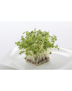 Broccoli Sprouting Seeds 50gram