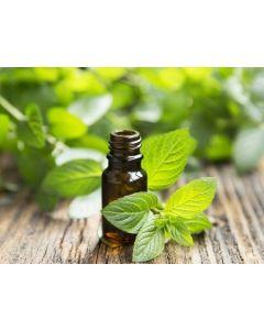 Peppermint Pure Essential Oil 10ml