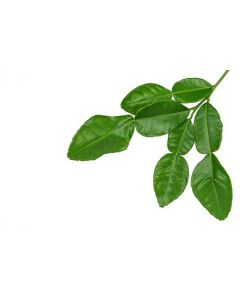 Kaffir Lime Leaf Powder 100 Gram