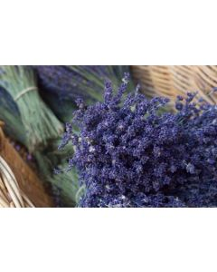 Lavender French Pure Essential Oil 10ml